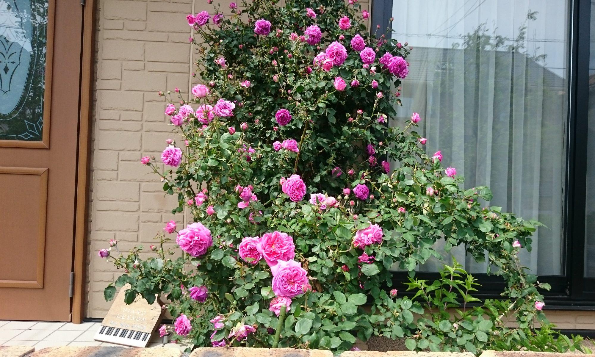 沼津市のピアノ教室 川北けい子ピアノ教室のブログ